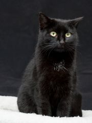 So sollen Katzenportraits aussehen