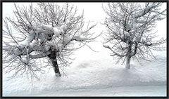 So sollte der Winter sein