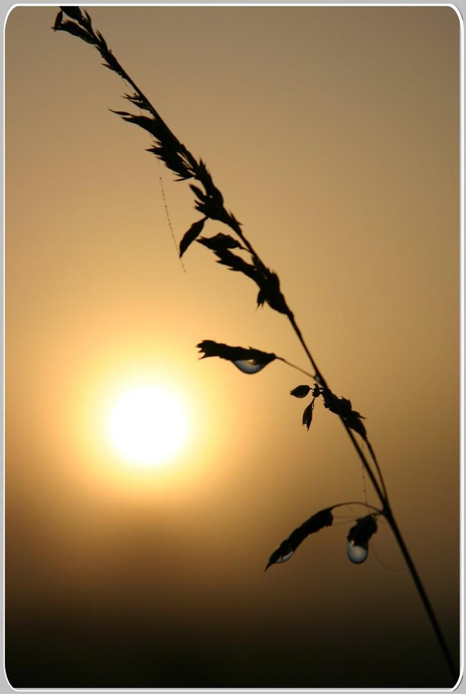 So unscheinbar - und doch so schön bei Sonnenaufgang