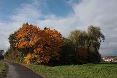 so unterschiedlich färbt der Herbst die Bäume
