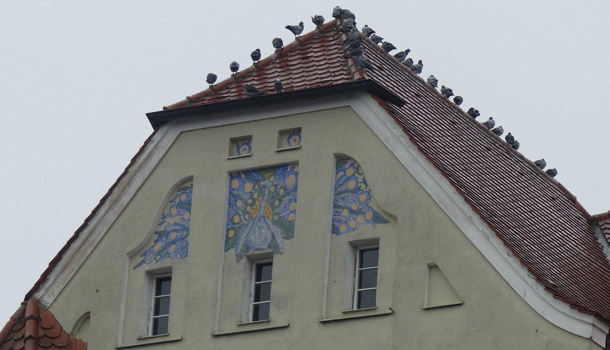 So viel Tauben, kein Platz für den Spatz