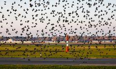 So viele Gäste am Flughafen