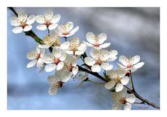 so zeigt sich der Frühling....