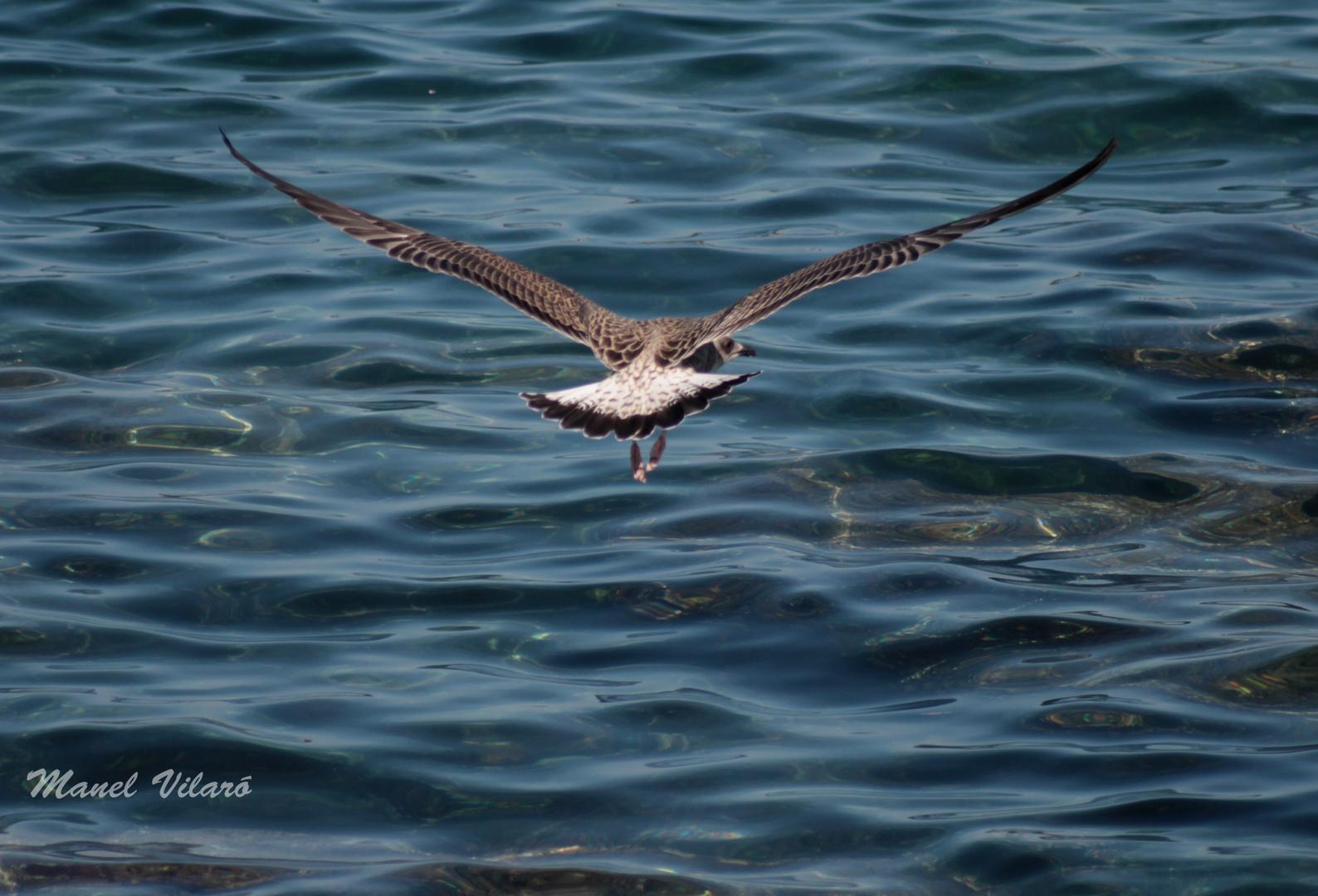 sobrevolant el mar