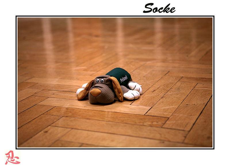 Socke unser Wachhund