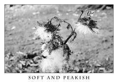 Soft and Peakish