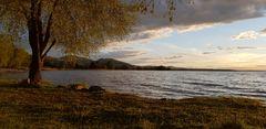 soft evening sun ...