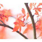 Soft focus leaves