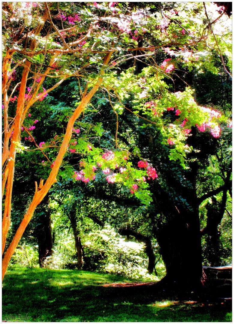 Soft Summer Breeze - a Patapsco Valley Impression