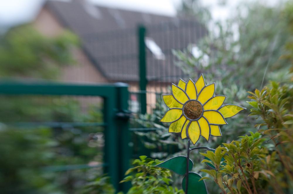 Sog auf die Sonnenblume