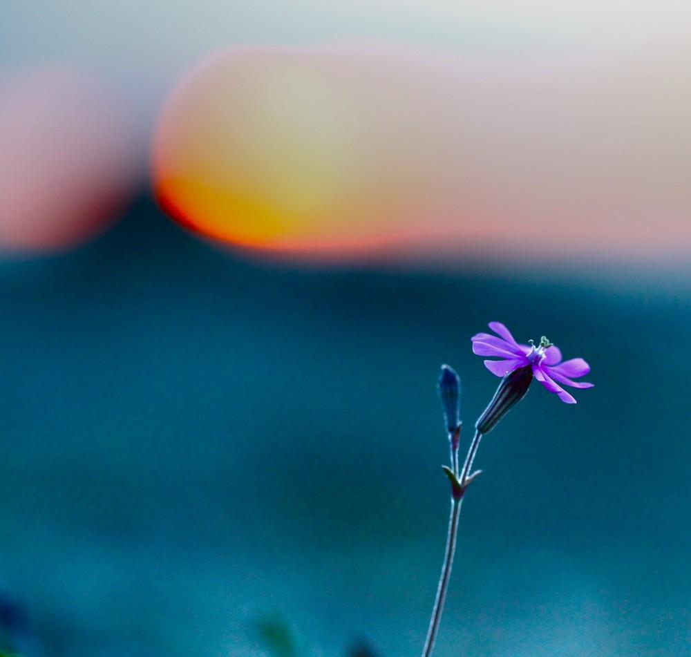 ...sogno...al tramonto