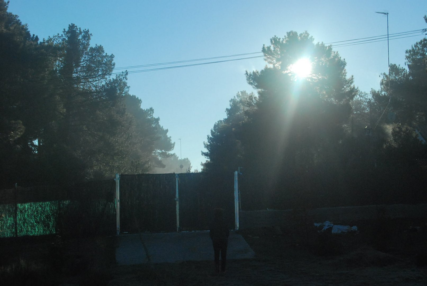 SOL ENTRE ARBOLES