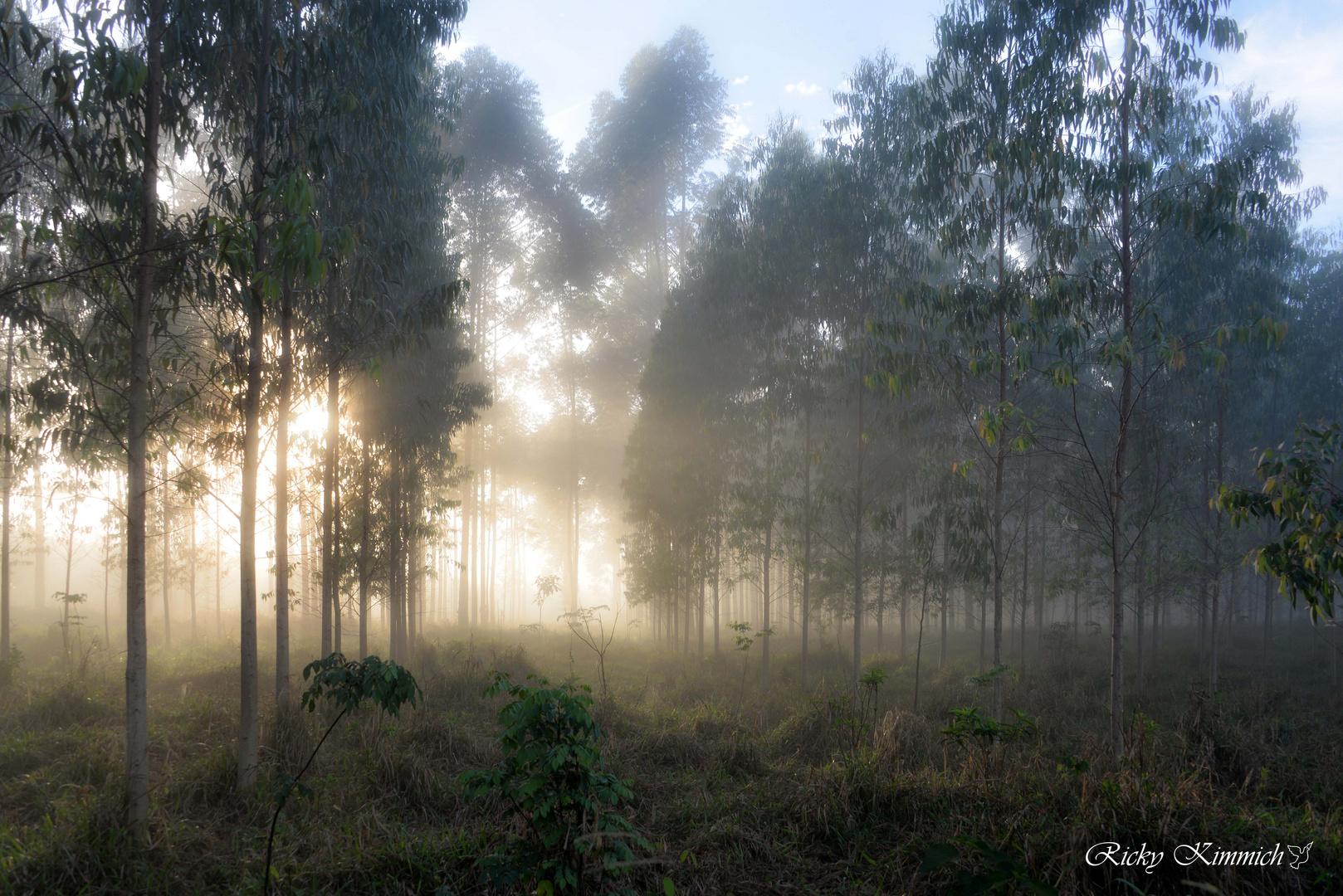 Sol y Niebla, mi energía