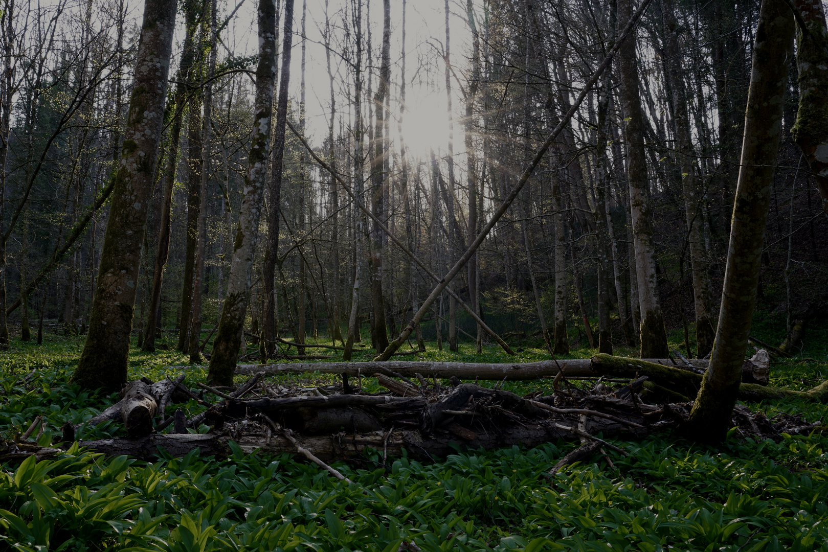 Solange das Walddach noch das Sonnenlicht durchlässt