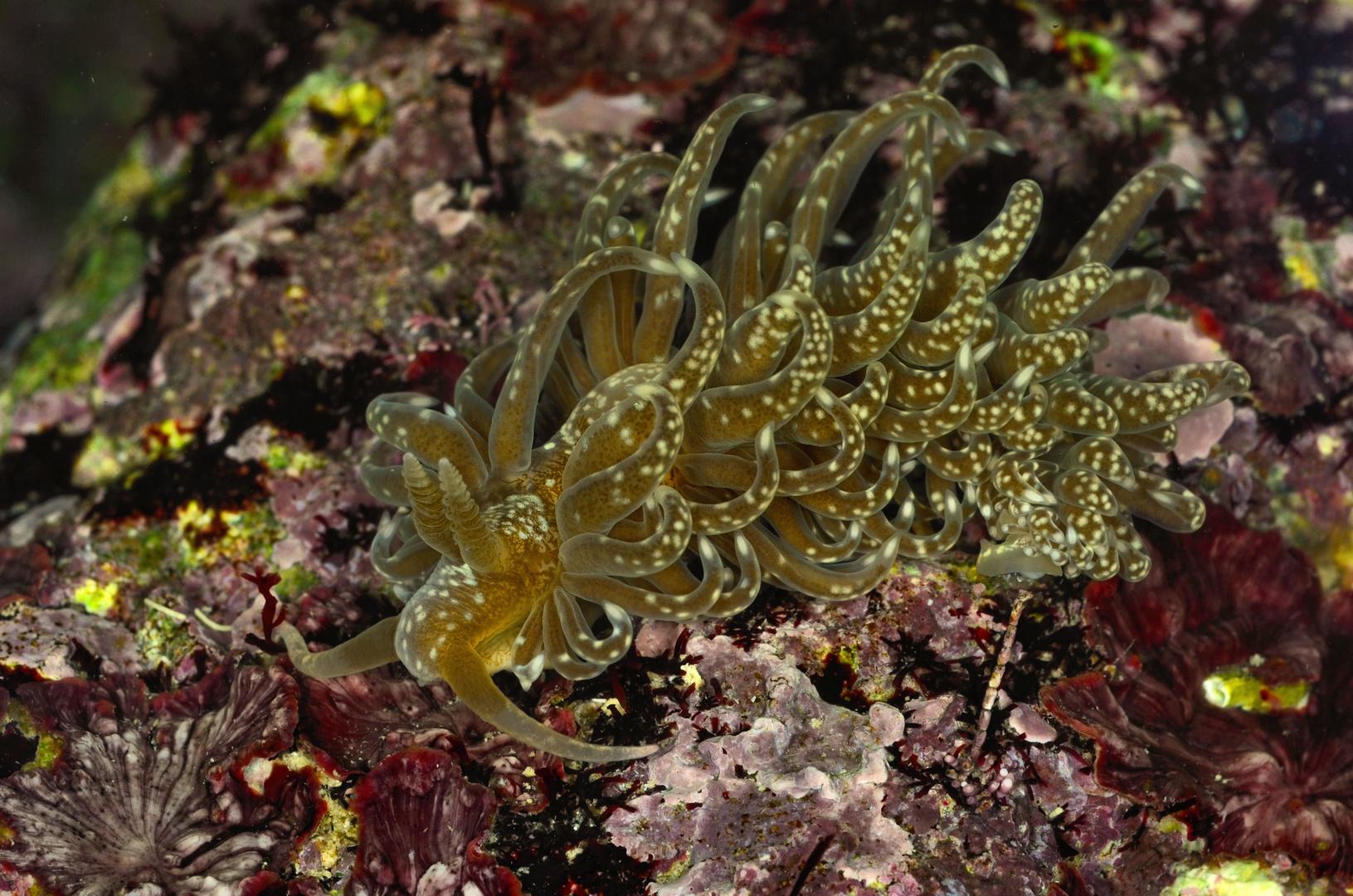 Solar powered sea slug