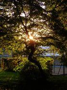 Soleil à travers les feuilles