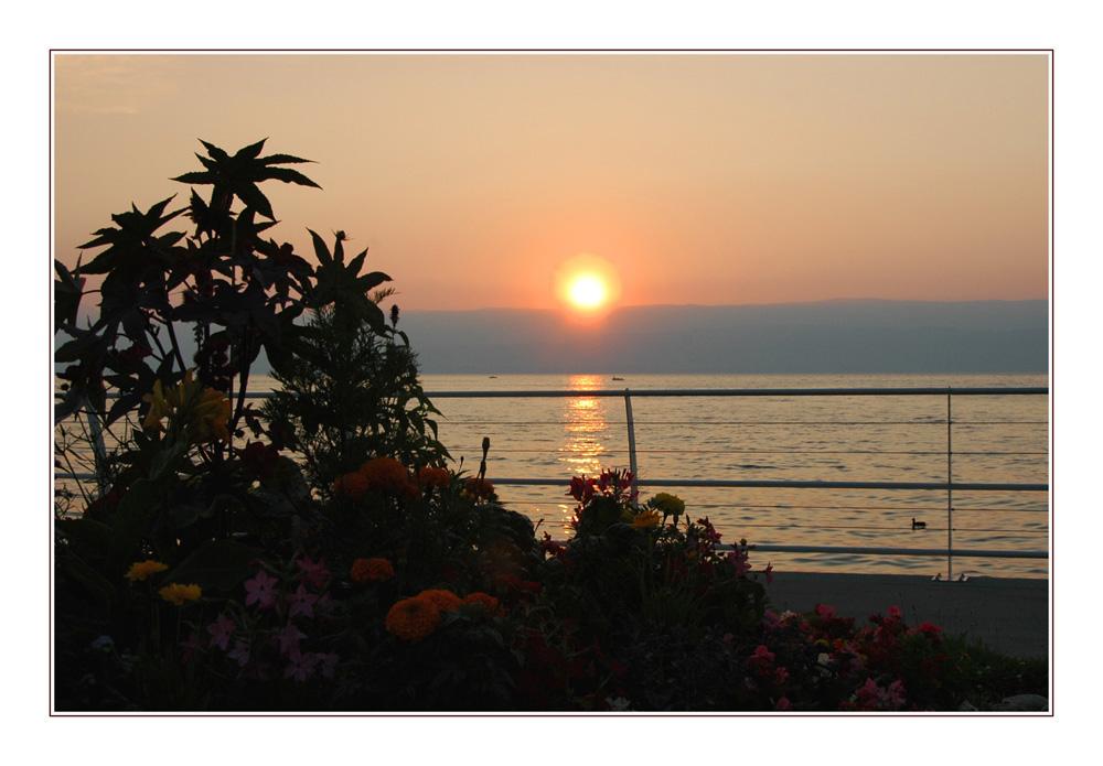 Soleil couchant à Thonon les Bains