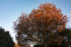 Soleil matinal sur feuilles rousses