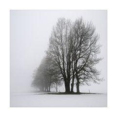 Solisten im Nebel I