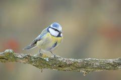 Solita foto di uccello su rametto.