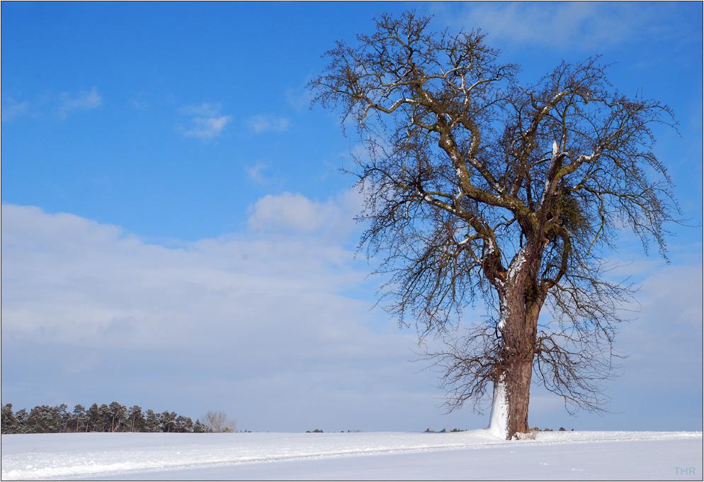 solit r baum im winter foto bild b ume wolken winter bilder auf fotocommunity. Black Bedroom Furniture Sets. Home Design Ideas