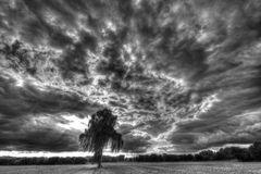 Solitär mit Wolken