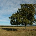 Solitary tree III