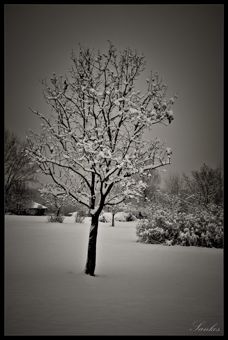 Solitary trees, if they grow at all, grow strong! - Winston Churchill -