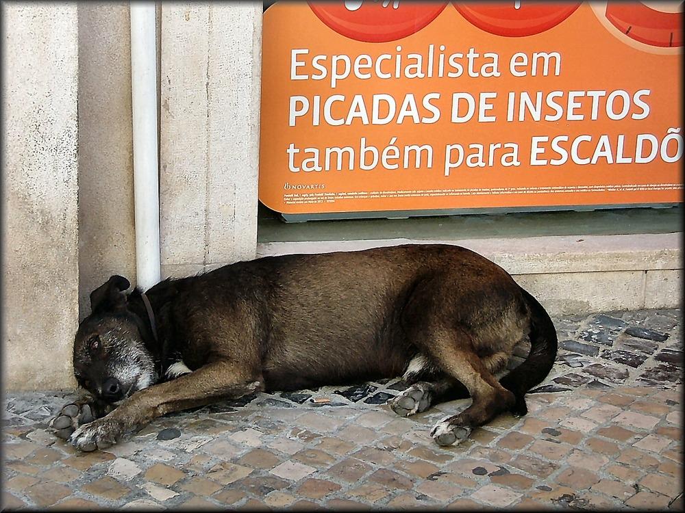Solitudine di  vecchio cane