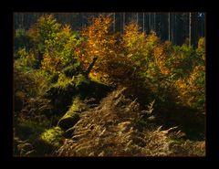 """Solling-Wald- Herbst-Komposition - oder: """"Werden und Vergehen..."""""""
