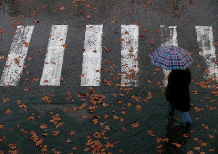 Solo foglie e pioggia