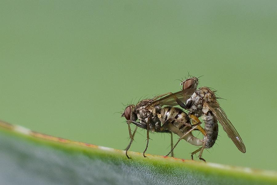 Solo para insectos mayores de 18