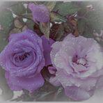 Solo rose...