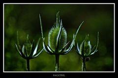 Sombre-lueur (Oxymoron)