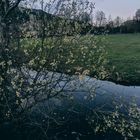Sombre Nature.