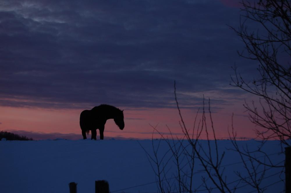 Sombre silhouette