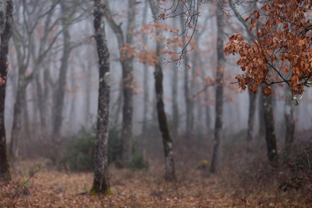 Sombres forêts