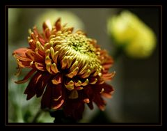 Some flowers....