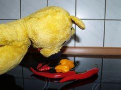 Some like it hot - der gelbe Bär erforscht Scoville Grade