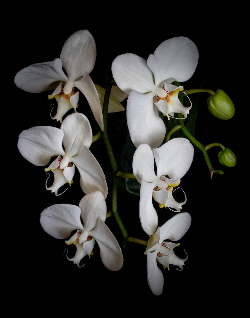 Some orchids
