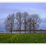 some trees in dortmund - 11/2008