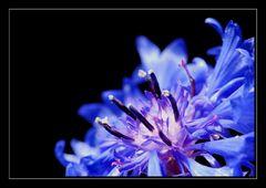 Something blue *