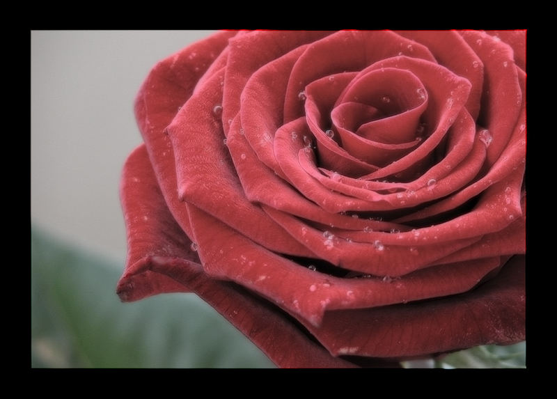 Sometimes a rose is not just a rose - No.2