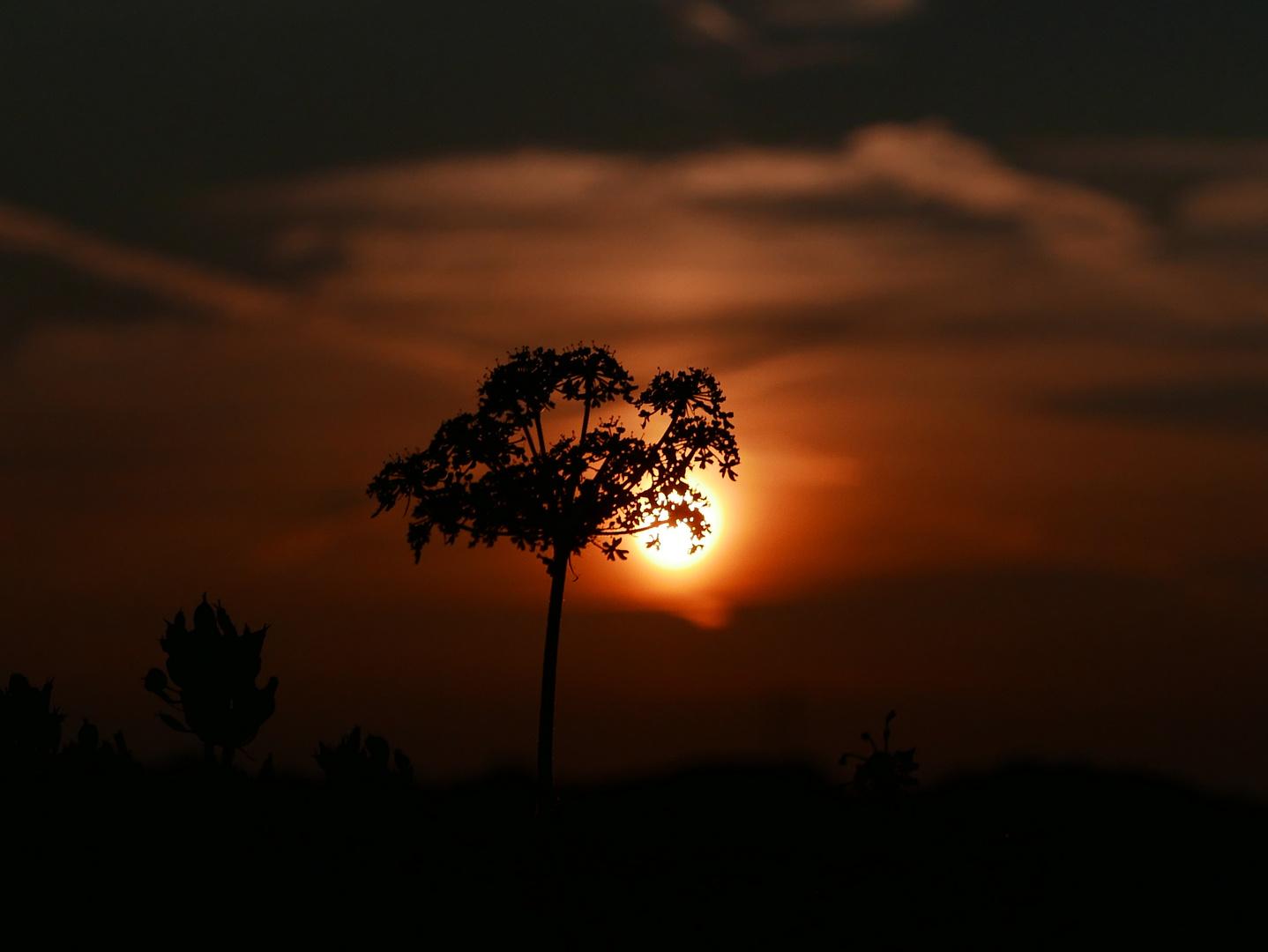 Somewhere in Afrika