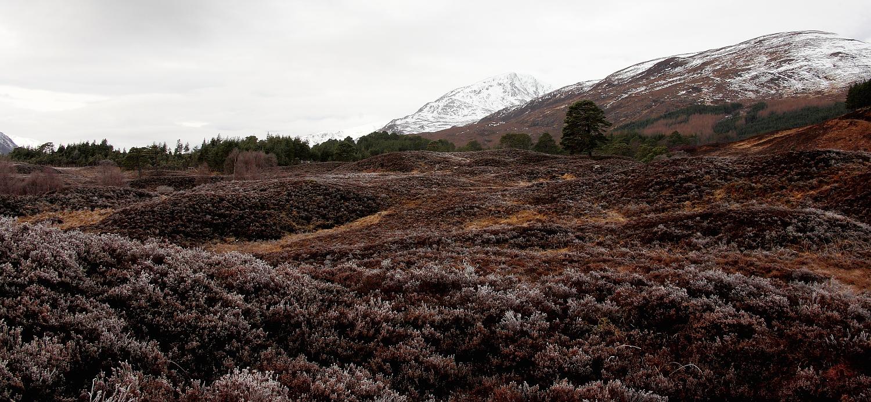 somewhere in Scotland (5)