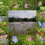 Sommer am Fluss -2