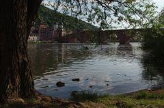 Sommer am Neckar