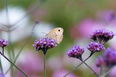 Sommer auf dem Blumenfeld...