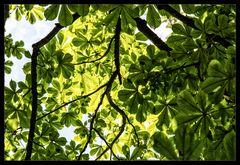 Sommer auf der Kastanienwiese