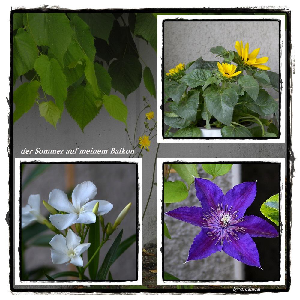 Sommer Auf Meinem Balkon Foto Bild Natur Blumen Pflanzen